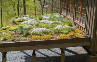 Green builders living roof by Sineath Construction